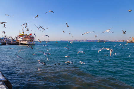 kadikoy: Seagulls in fight for food
