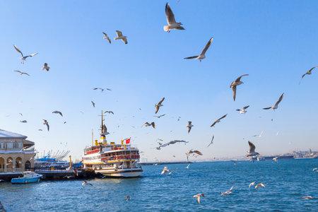 seaway: active seagulls over blue sea birds