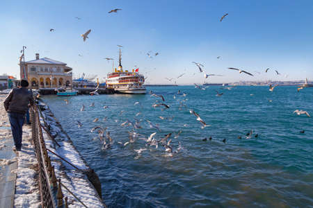 food fight: Istanbul winter a day, seagulls in fight for food