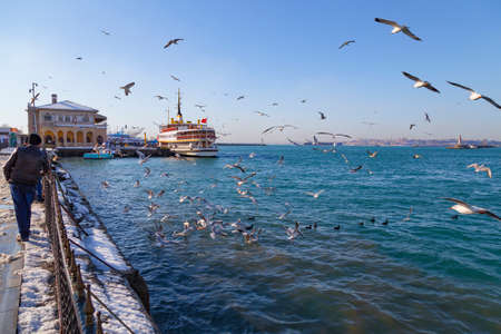 kadikoy: Istanbul winter a day, seagulls in fight for food