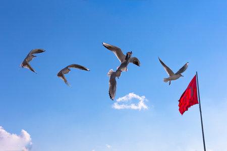 seaway: Seagulls flying over the Bosporus Editorial