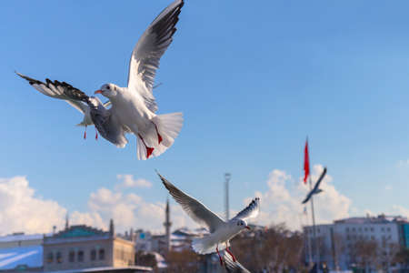 istanbul beach: Seagulls chasing Ship. Istanbul, kadikoy