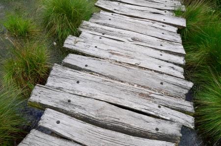 Path through bog photo