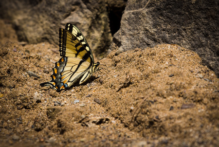 beach butterfly: Yellow Butterfly Stock Photo