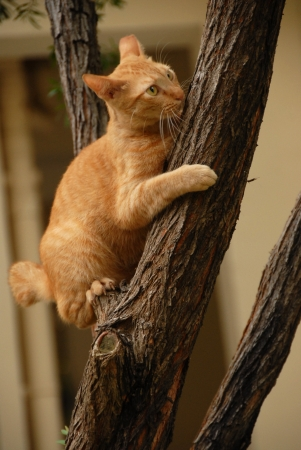 Yellow Cat Climbs on Tree