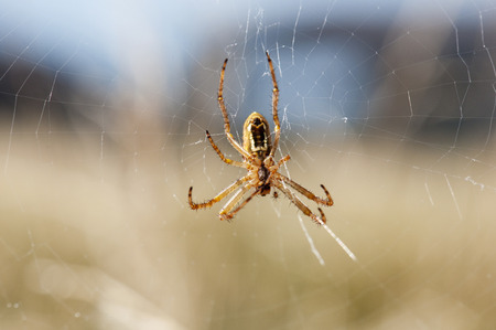 arachnids: A closeup of a spider on the spider web Stock Photo