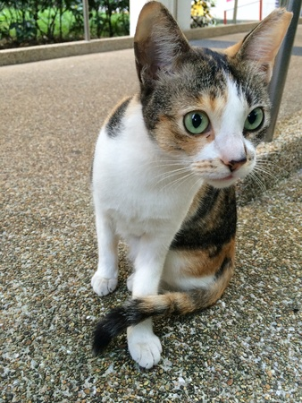 eye: Stray cat is sitting and alert of its surrounding