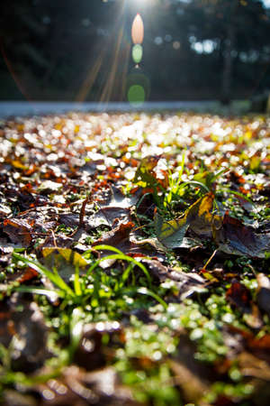 shinning leaves: sunlight