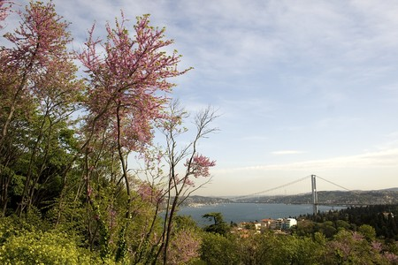 A sceene including Redbud trees  from Bosphorus of Istanbul Turkey Stok Fotoğraf - 7201606