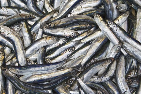 engraulis: Anchovy in the bazaar. A very important fish in Turkish culture esp. for Blacksea region