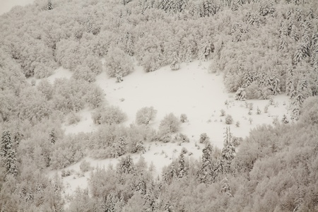 Daytime view of a forest under snow in the winter  Stock Photo - 12304702