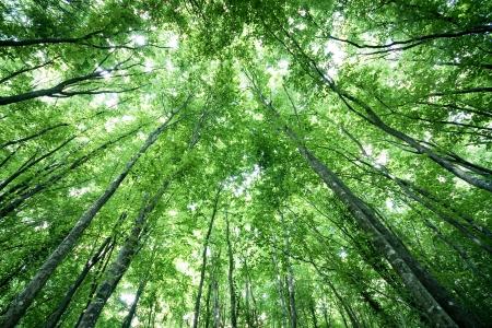 forrest: Prachtige bomen ontmoeten elkaar op de hemel in een bos