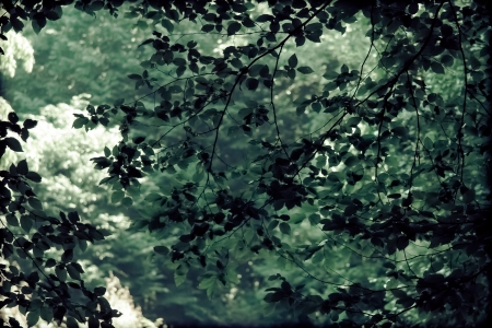 wonderfull: Wonderfull tree leaves in front of a green forrest background