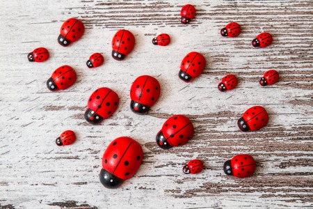 Wooden toy ladybirds on white wooden background