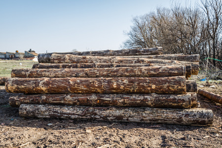 forestry: Dry woodpile of cut lumber ready for forestry industry