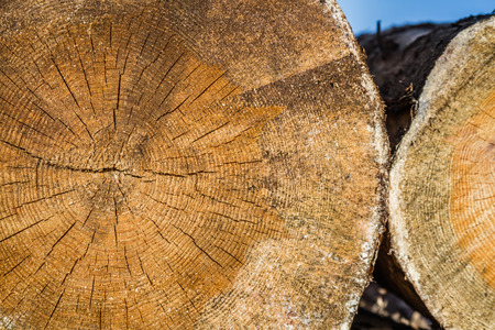 forestry industry: Dry woodpile of cut lumber ready for forestry industry
