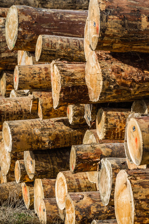 lumber industry: Dry woodpile of cut lumber ready for forestry industry