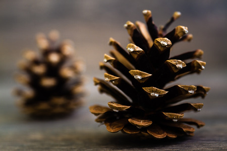 pine three: Three pine cones nice and dry on brown wooden table Stock Photo