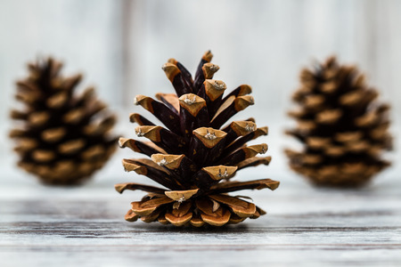 pinetree: Natural dry pine cones on wooden white table background