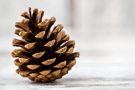 Pine Cone 版權商用圖片 - 41902801