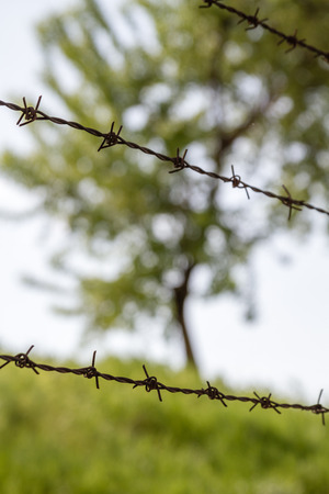 barbed wire: Green tree and nature behind barbed wire Stock Photo