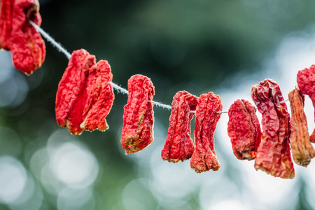 hanged: Hanged dry chili peppers on natural green background Stock Photo