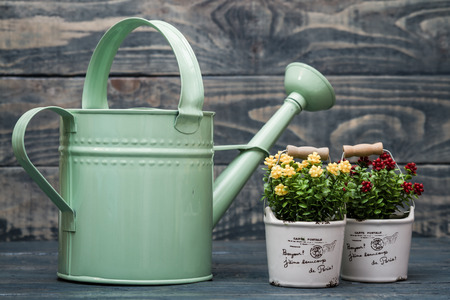 wateringcan: Simple green metallic watering can on blue wooden background Stock Photo