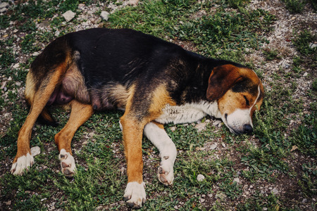 Lonely dog sleeping outside in garden