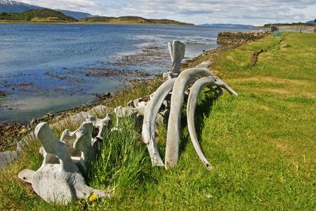 tierra del fuego: Whalebones by Beagle Channel in Tierra del Fuego