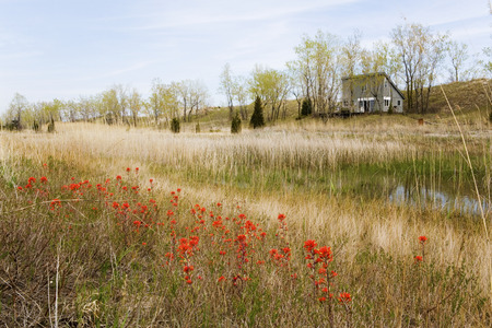plains indian: A field of Wild Indian Paintbrush Stock Photo