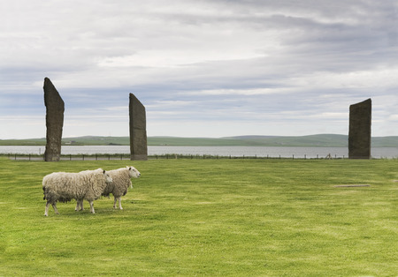 obelisk stone: Standing Stones of Stenness, Orkney with a pair of sheep Stock Photo