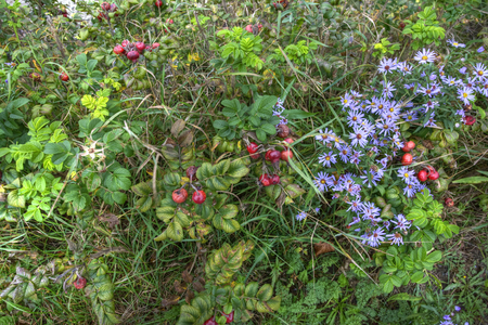 Details of colorful autumn plants Фото со стока
