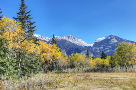 A Rocky Mountain view with yellow aspens
