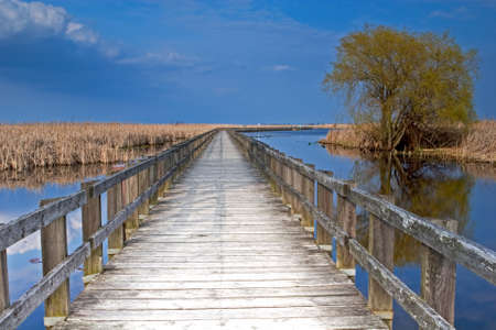 The Marsh boardwalk at Point Pelee, Canada 写真素材