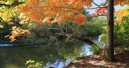 View of Fall colors by a quiet creek