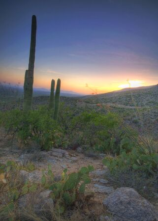 A Saguaro Cactus view at sunset