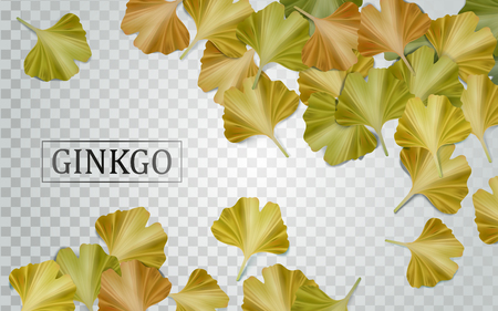 Ginkgo biloba elements, natural yellow leaves isolated on transparent background in 3d illustration