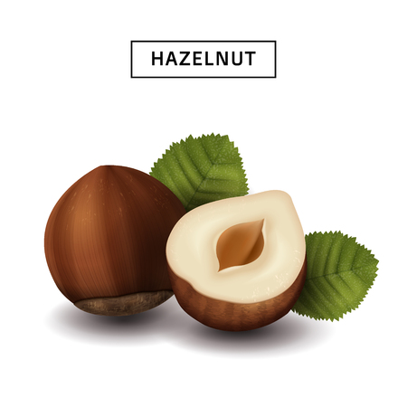Hazelnut elements for design uses, isolated white background, 3d illustration