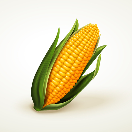 vers heerlijke maïs, kan worden gebruikt als ontwerpelementen, geïsoleerde witte achtergrond 3d illustratie Stock Illustratie