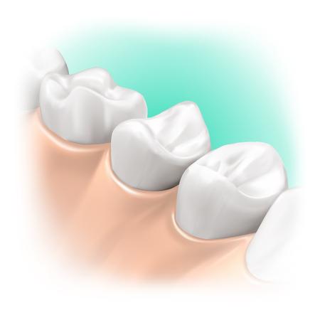 위생 또는 치과 치료 제품의 구강 내, 현실적인 모델 일러스트