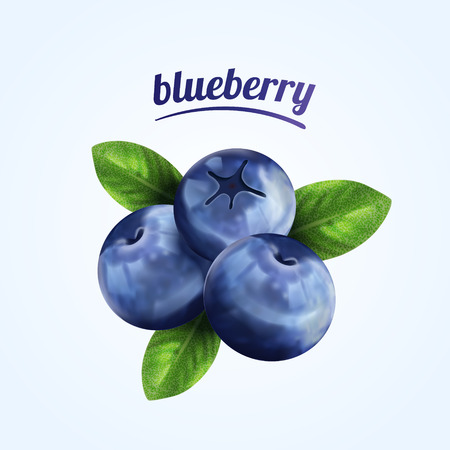 Isolated fresh blueberries illustration.