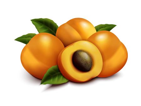 アプリコットフルーツのイラスト、クローズアップは、白の背景に分離された3d イラストでセクションと緑の葉と新鮮な果物を見て、  イラスト・ベクター素材