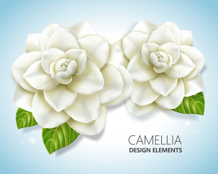 White camellia elements, elegant floral in 3d illustration for design and decoration uses