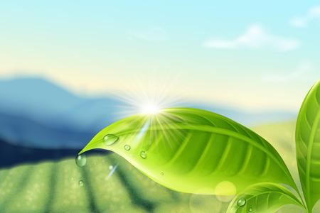 Green tea plantation background in 3d illustration for design uses Illustration