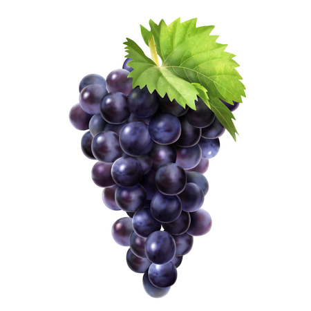 Isolated dark grape with green leaf in 3d illustration on white background