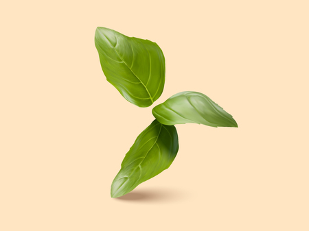 Fresh green basil leaves in 3d illustration, closeup look