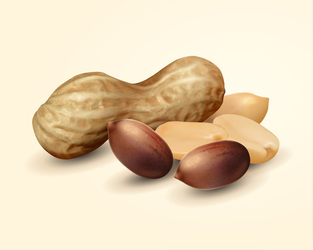 Closeup look at peanut in shell, 3d illustration food ingredient design element