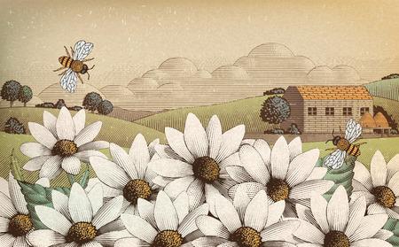 Paysages de campagne vintage dans le style de gravure, fleurs sauvages et abeilles