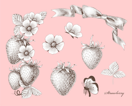 Engraved strawberry and flowers elements on light pink background