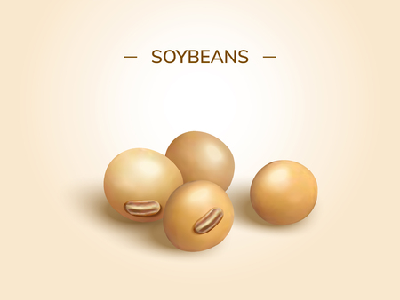 Closeup look at soybeans design element in 3d illustration Illustration